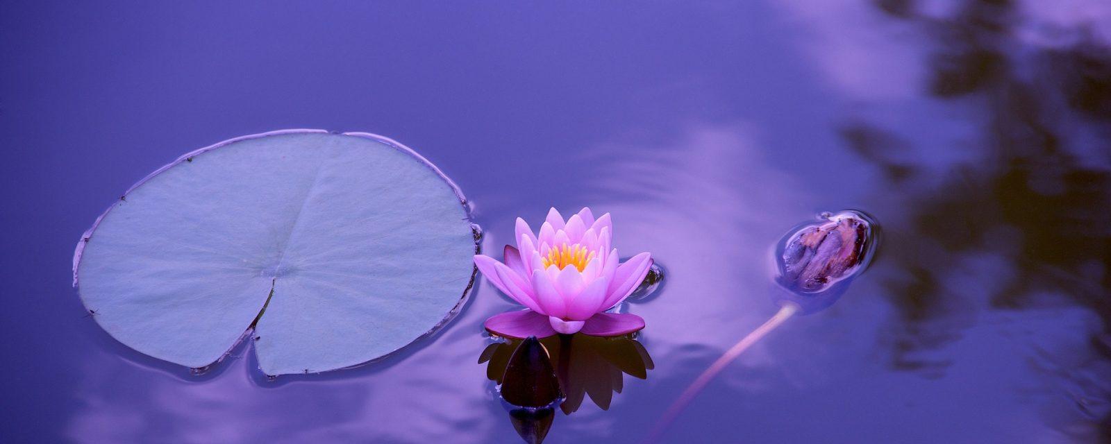cropped-lotus-1205631_1920-1.jpg