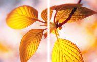 Download - Facebook Bilder Karussell Photoshop Template (2 Bilder)