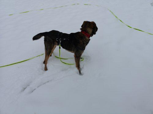 Mickey im Schnee