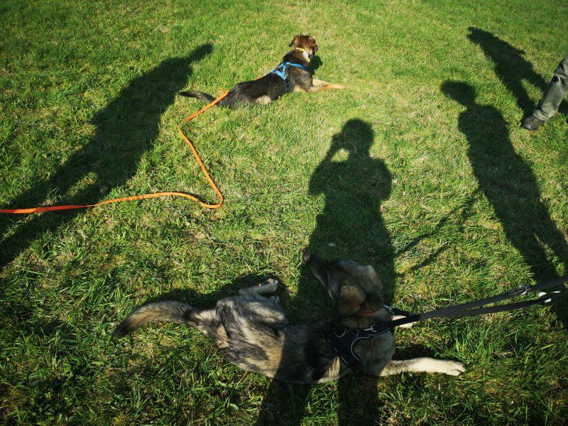 4 Schatten und 2 Hunde