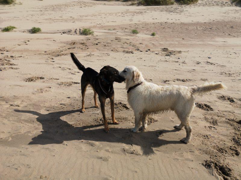 Hundetreffen am Strand