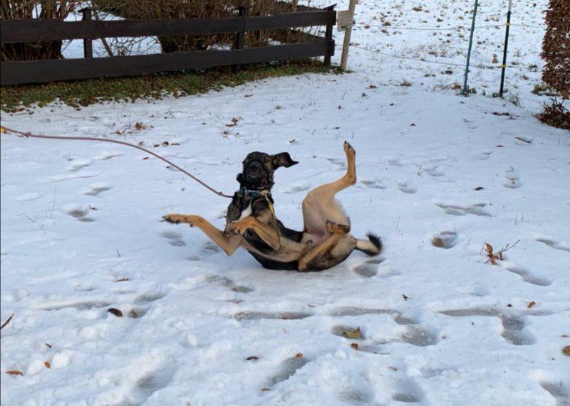 Wälzen im Schnee