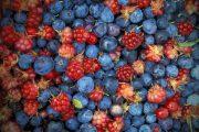 3 TOP fruchtig beerige Gins
