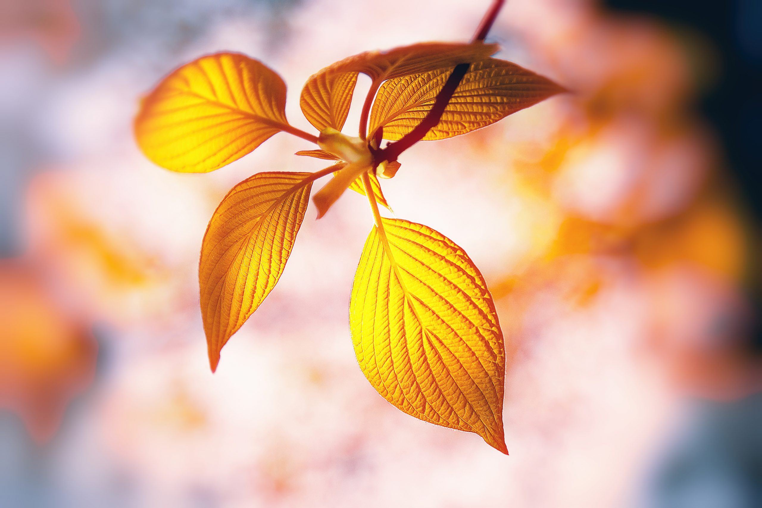 Golden_Leaf2