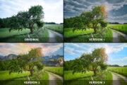 1 Bild - 4 Versionen: Dramatic Tree