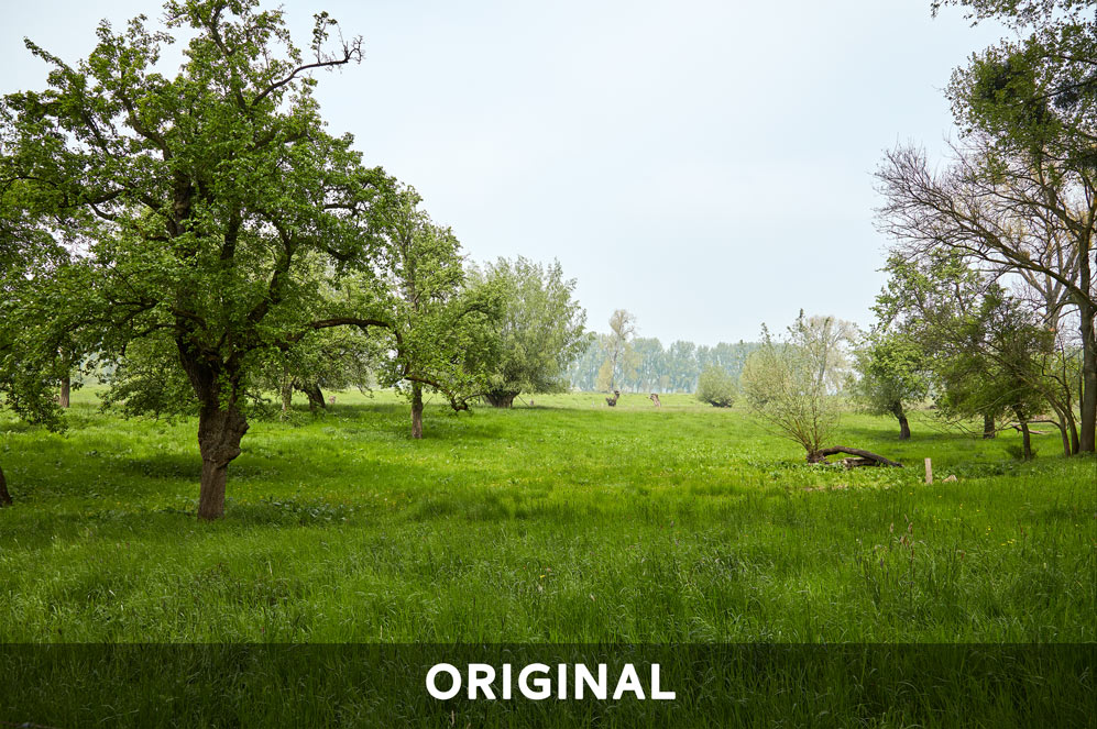Mystique Fields Original